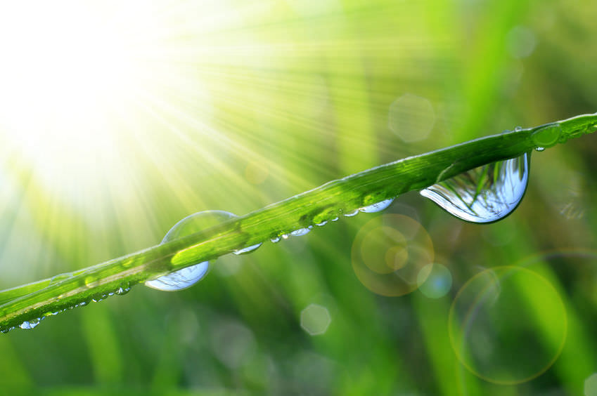Read more about the article Wie wichtig ist Chlorophyll?